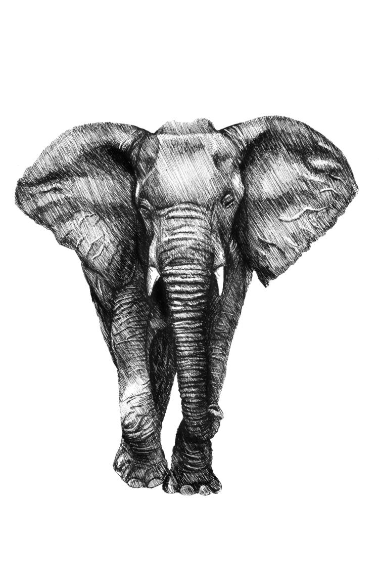 Elefante 1 (estudio). 2017 - art - fronkie | ello