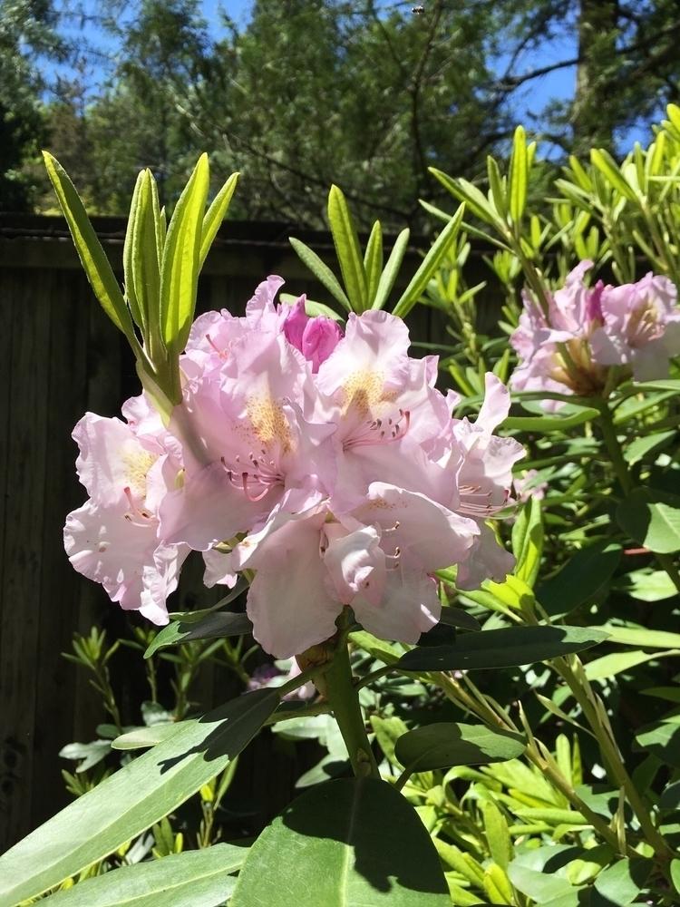 Blossoms flowers photogenic - mrbinsk | ello