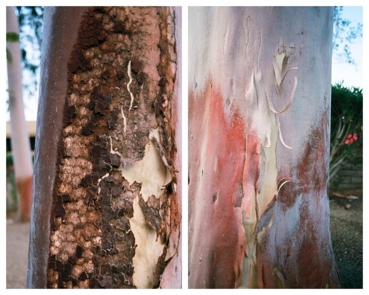 (Insert title) skinless tree - conceptual - talyo | ello