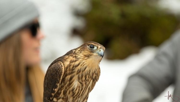 nature, alaska, wildlife, hainesalaska - departureflight   ello