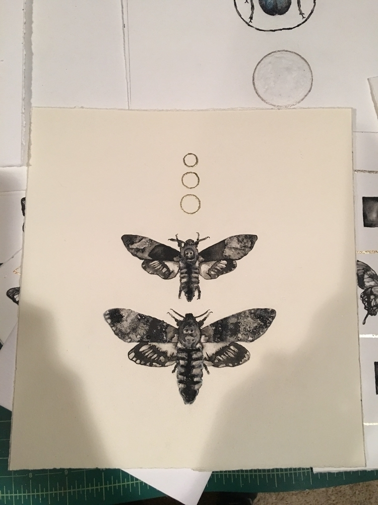 deaths head hawkmoths. Ink 18k  - alexakarabin | ello
