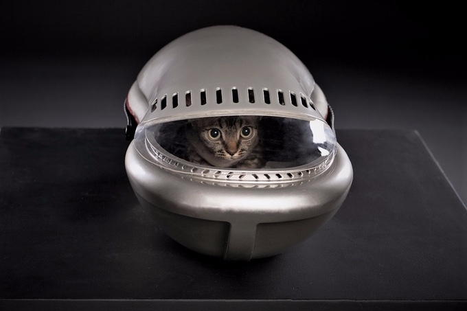 Give cat comfy spaceship carrie - bonniegrrl | ello