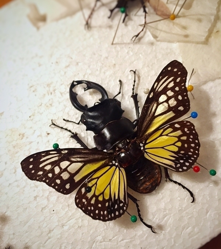 Chimera beetles, beetle/butterf - pinsandbeetles | ello