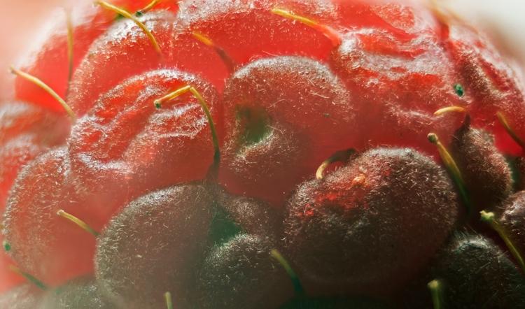 Raspberry Close - macro shot ra - neilhoward   ello