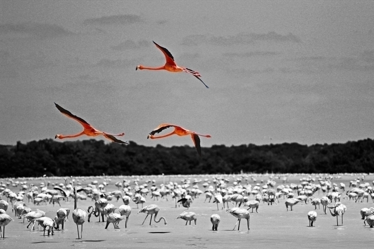 Color splash - photography, nature - peri_maza | ello