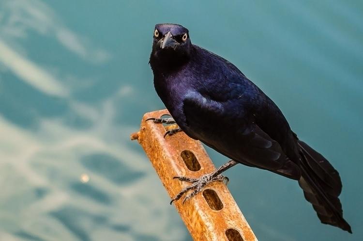 Panama - photography, wildlife, panama - nickywaikiki | ello