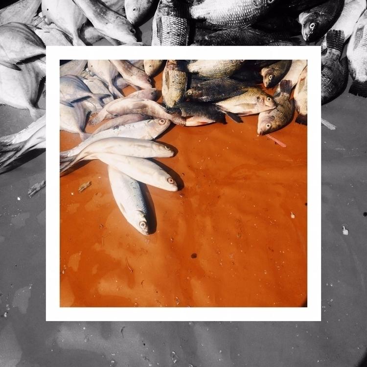 Fishes. | Les Poissons. Ikan-ik - aggnarut | ello