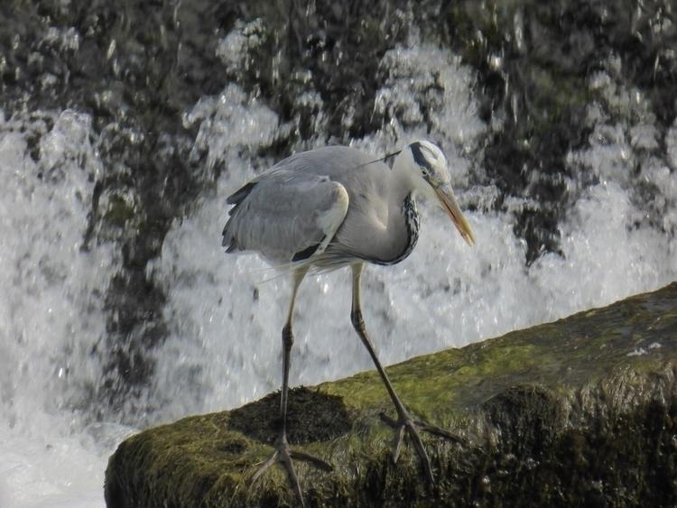 Fishing River Suir - Ireland, nature - paulbines   ello
