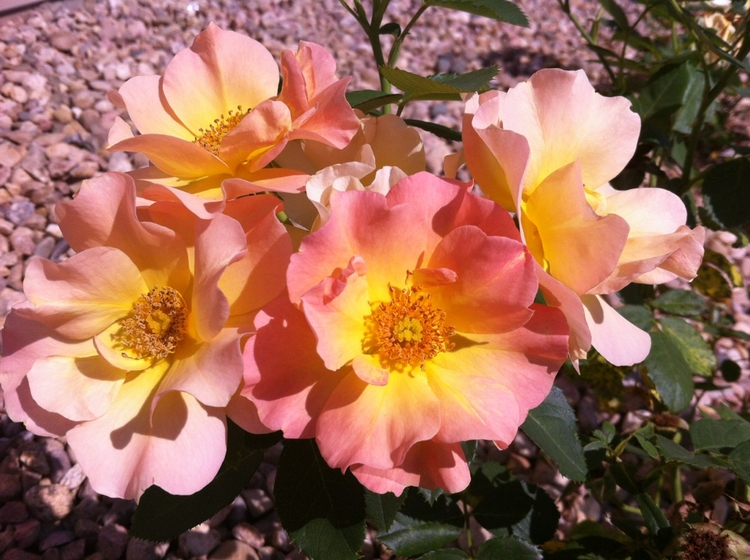 summer, sunset, flowers, westernflowers - laylas | ello