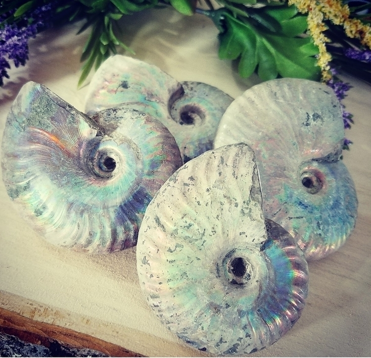 Opalized Ammonite (fossil shell - the_eclectic_shaman | ello