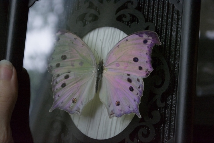 Forest Mother Pearl butterfly f - thebutterflybabe | ello
