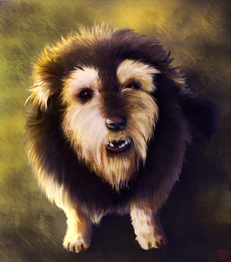 Morgo - Portrait doge ^^ - dog, pet - malthus_wolf | ello