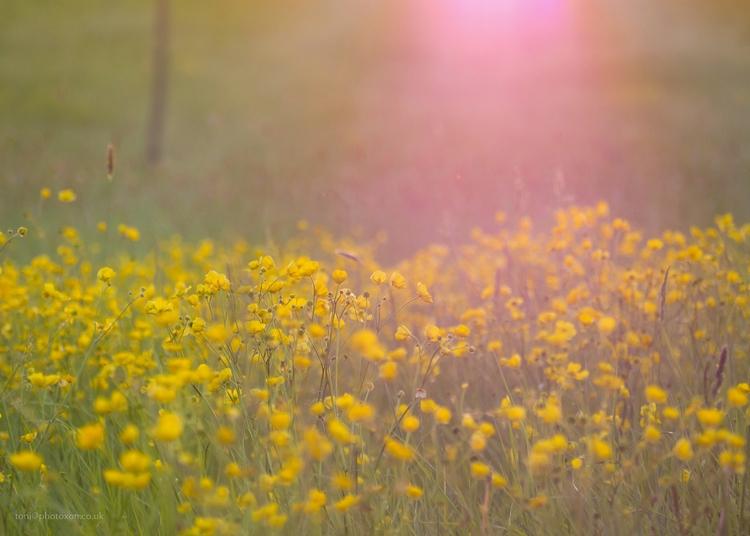 Lensflare daisies Olympus 40-15 - toni_ertl | ello