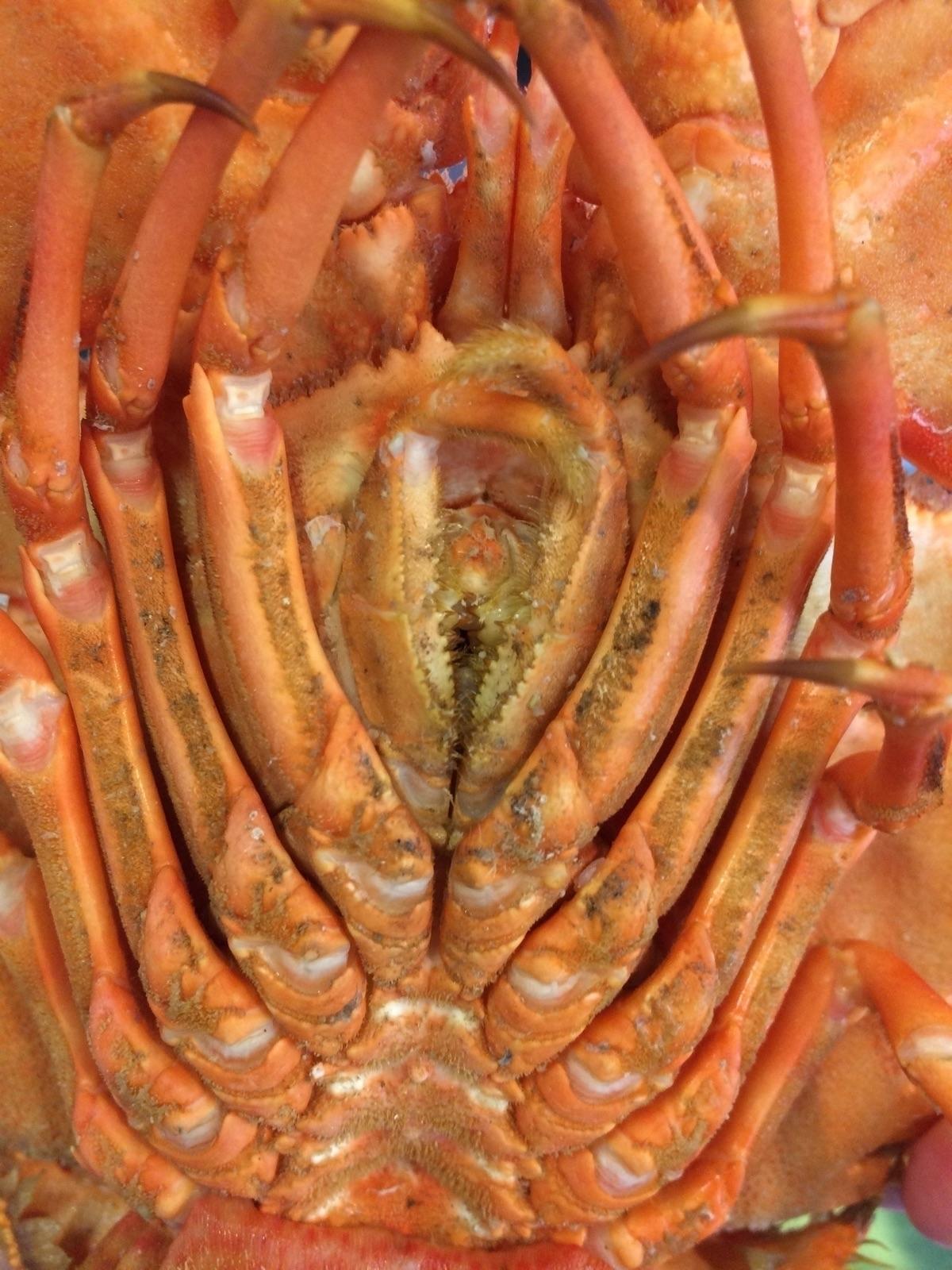 Thai lobster - 48living   ello