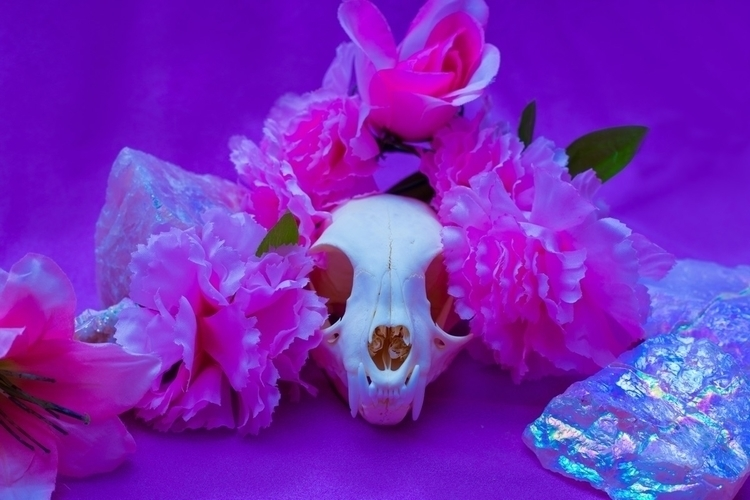 :purple_heart:Felis Catus Purpl - raemystic | ello