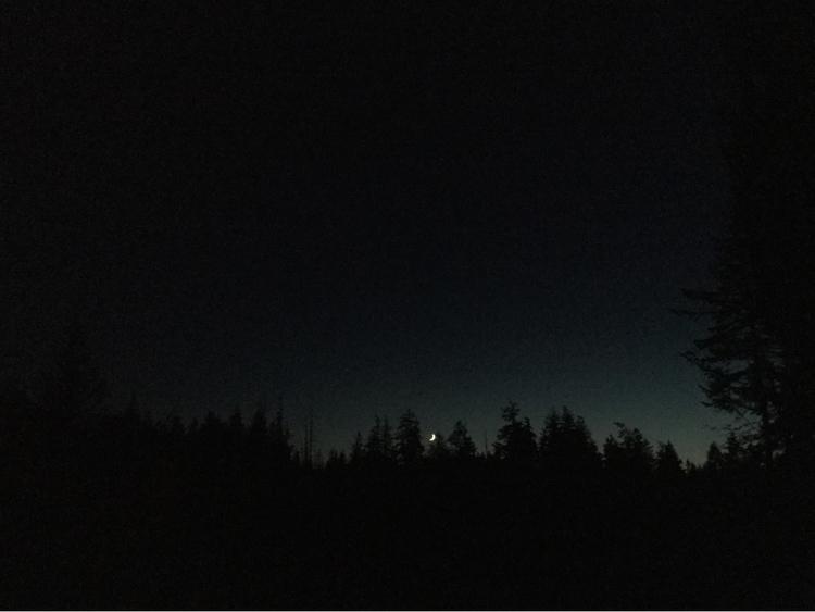 Yard View - backyardview, moon, skyline - laurabalducci | ello