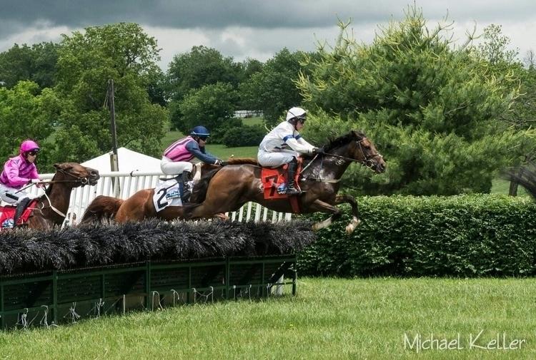 steeplechase, horses, racing - evildad | ello