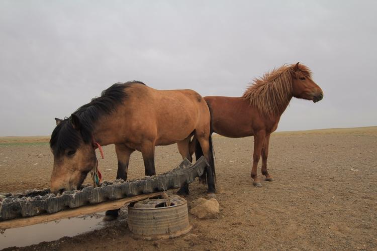 Mongolia. Horses watering - tmayko | ello