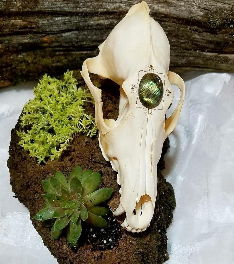 art, skullartist, skulls, succulents - skullographer | ello