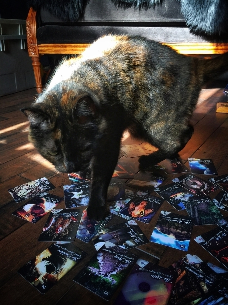 Outtakes attack miso cat - tarot - thewitch | ello