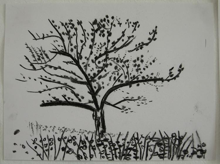 Tree springtime - Charcoal pape - miccaman | ello