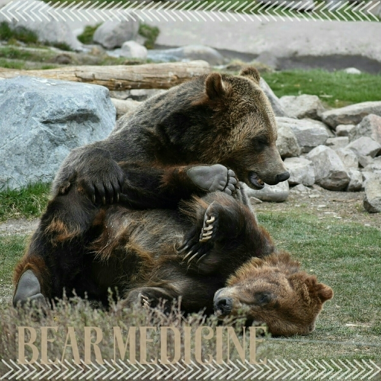 Bear spirit animal? lucky prese - sacredservicereiki | ello