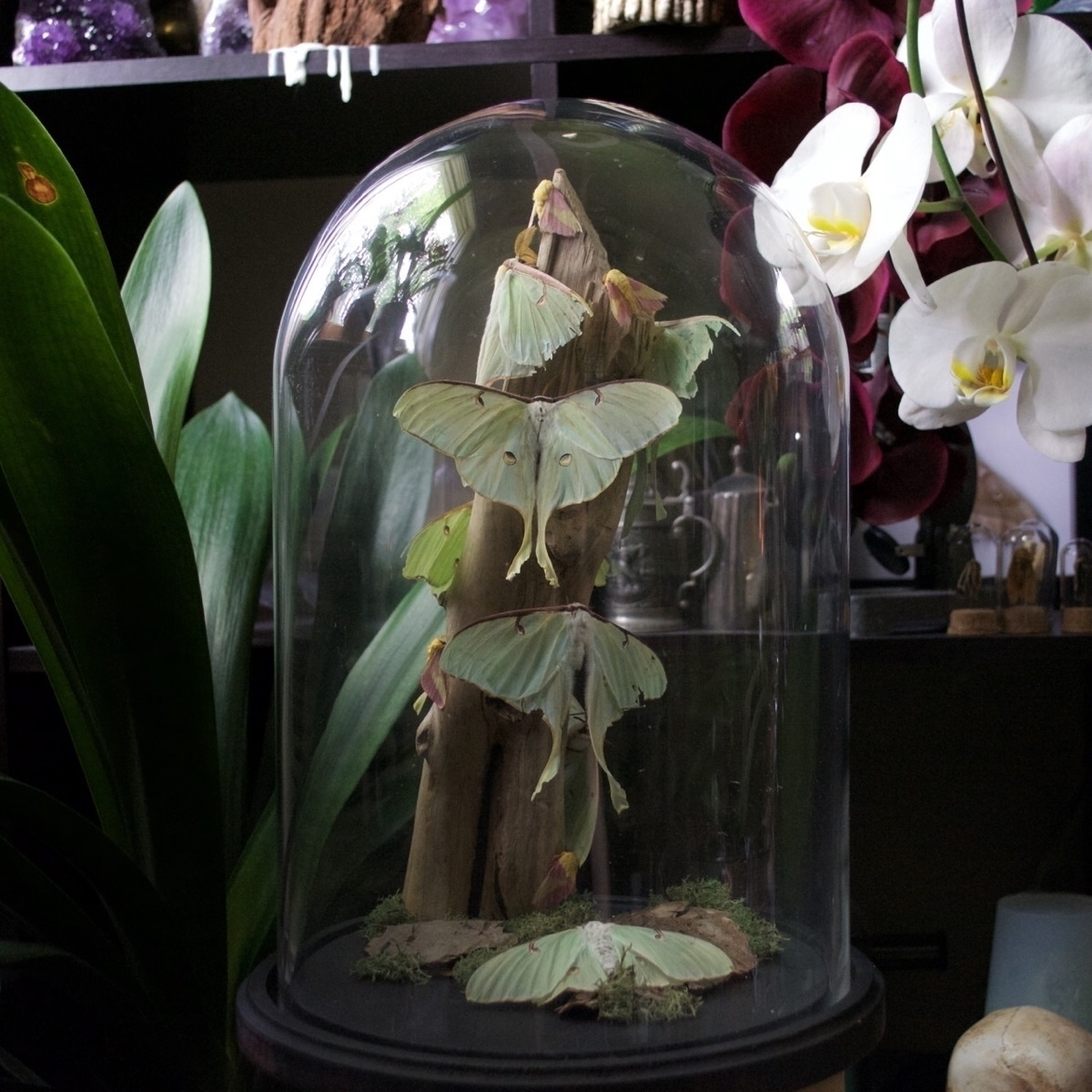 damaged Silk moths find jewelry - thebutterflybabe | ello
