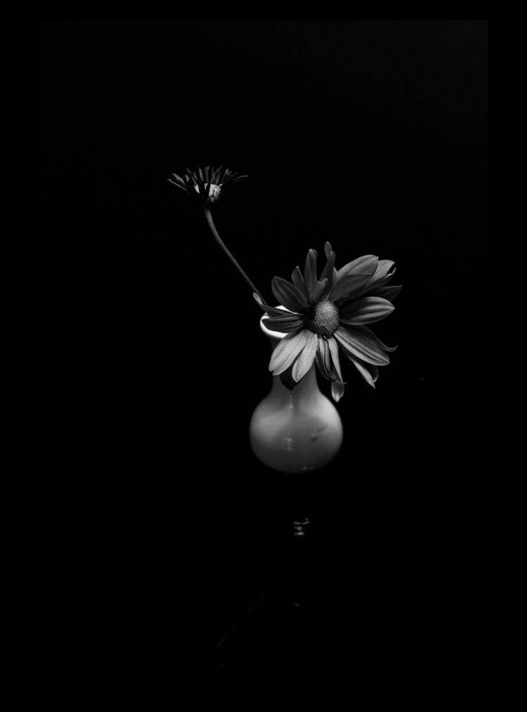 photography, flower, blackandwhite - wagnerwma   ello