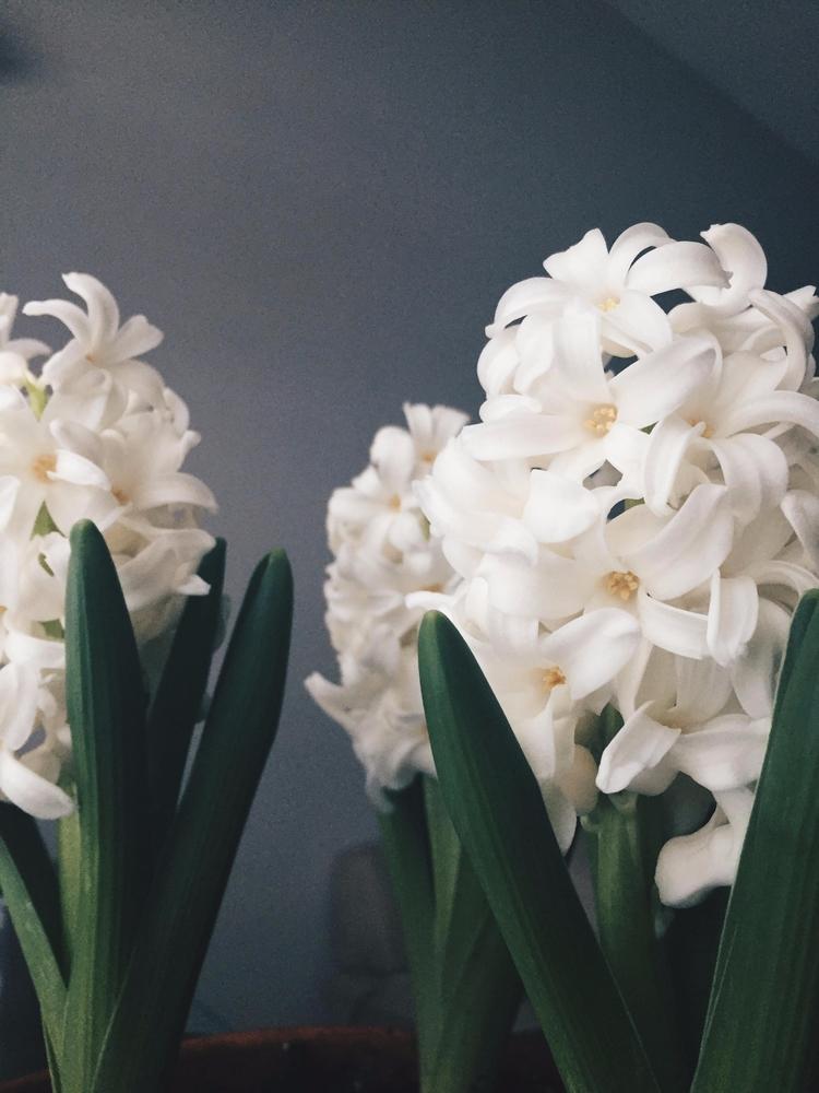 Flowers | Spring 2015 - flowers - toriamia | ello