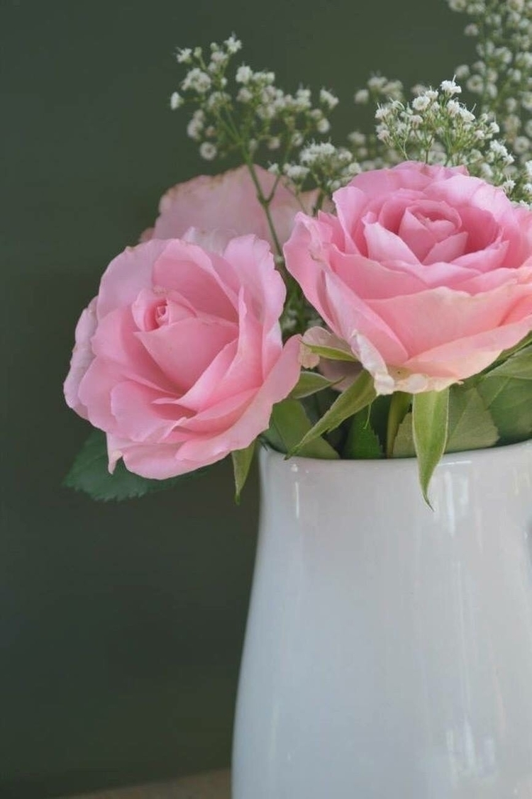Roses - Cafe, tenby, vase, photography - kristalcave | ello