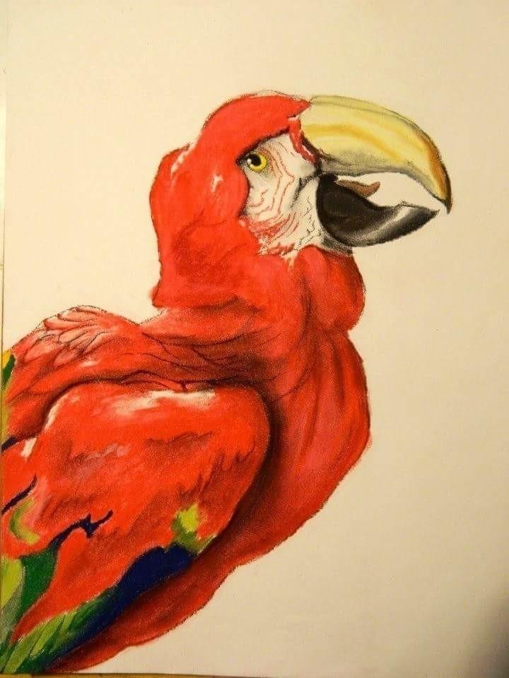pastel drawing - helvetejakthund | ello