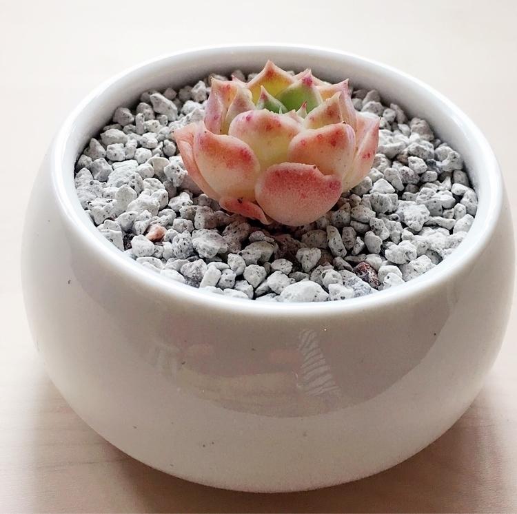 Good night - blueskysucculents | ello