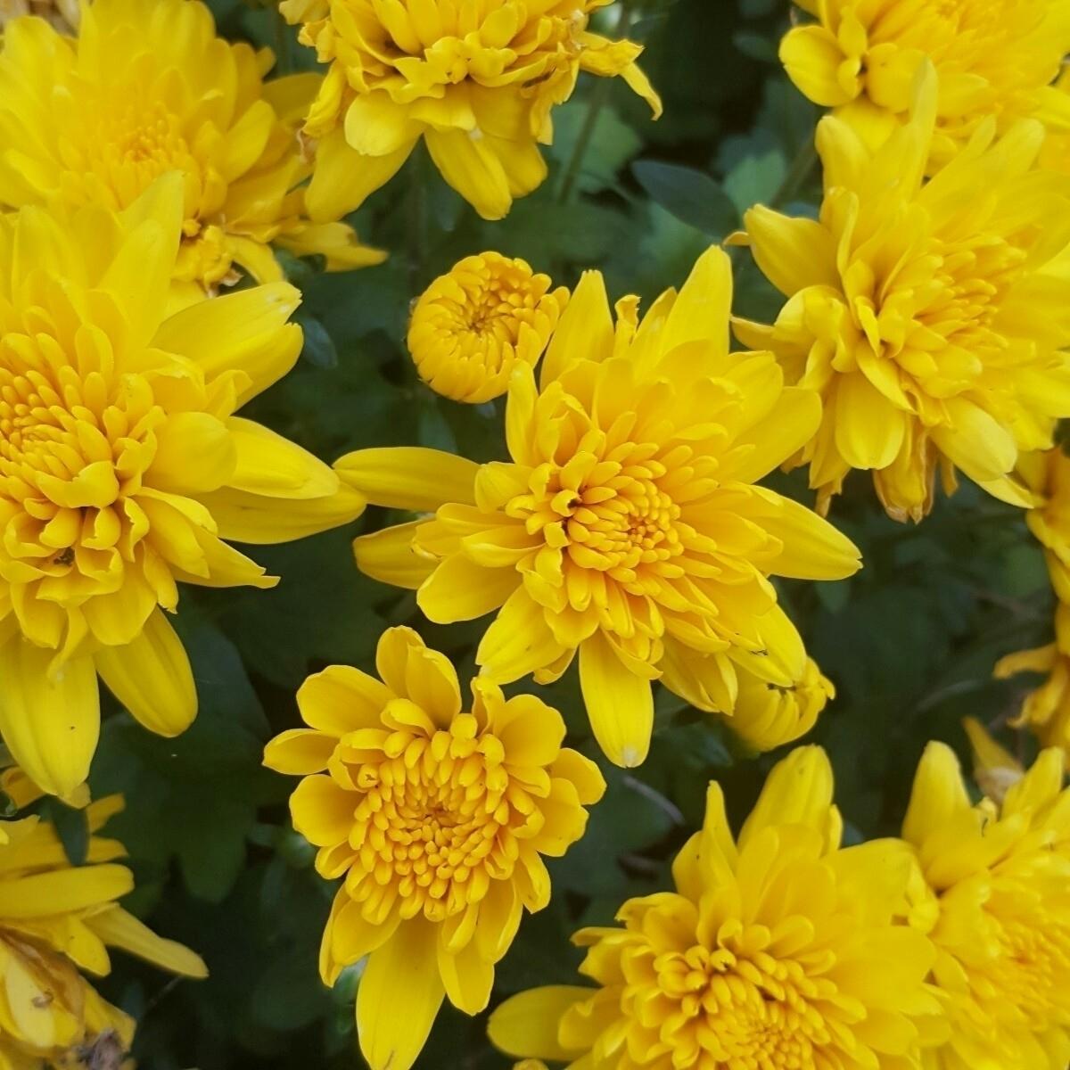 garden calms centers - flowers, spring - mysticearth | ello