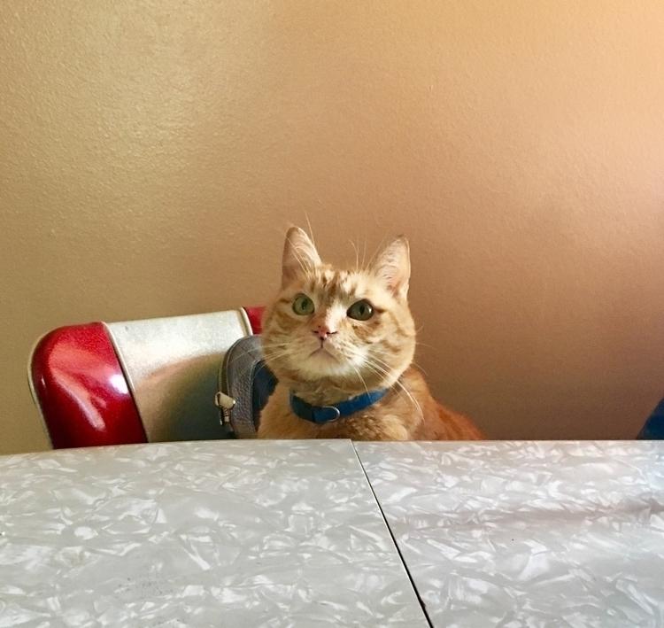 Claude cat - mojavemoonjewelry | ello