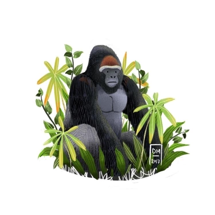 Gorilla - illustration - doodlesmarc | ello