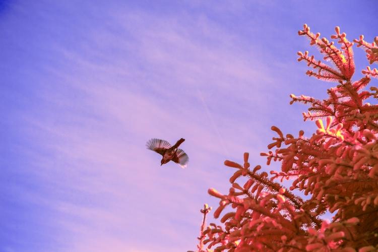 Freebird - Tofino - shawnangelski | ello
