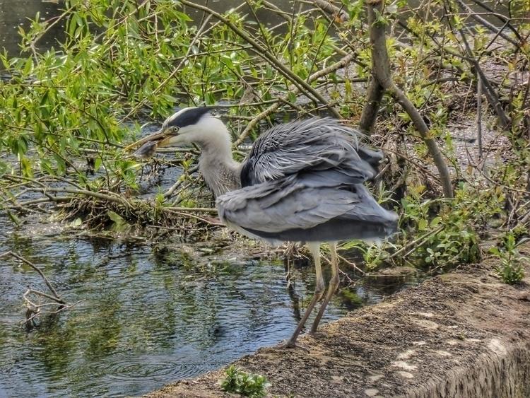 bird, day, fish - Ireland, nature - paulbines   ello