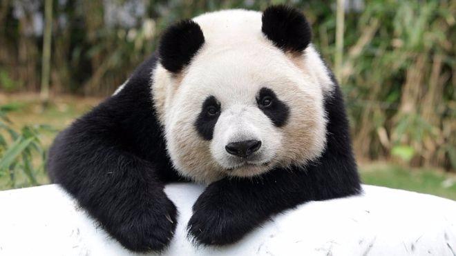 Raiola manda el panda - raviola-manda-y-no-el-panda | ello