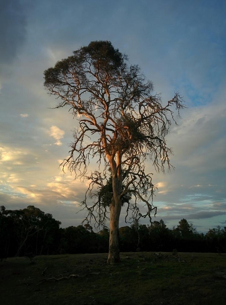 tree - charleysforestsilver | ello