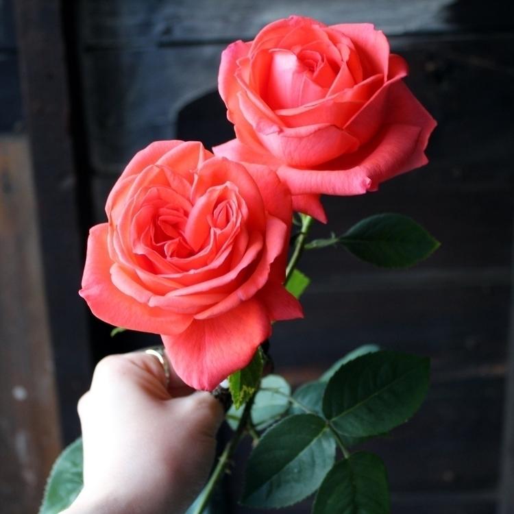 Garden Rose love―bugs, thorns 🥀 - leila_olive | ello