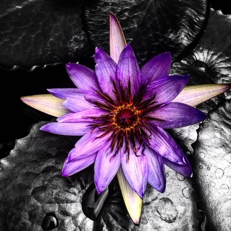 colorspalsh - peri_maza | ello
