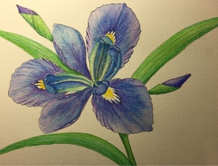 Iris watercolors - artistinme4ever | ello
