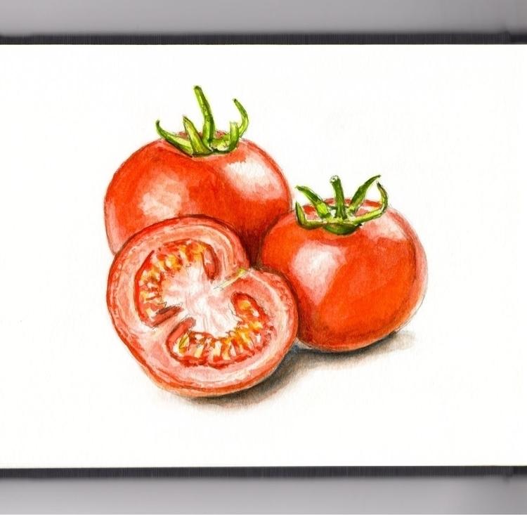 Finding Fresh Tomatoes - watercolor - doodlewash | ello