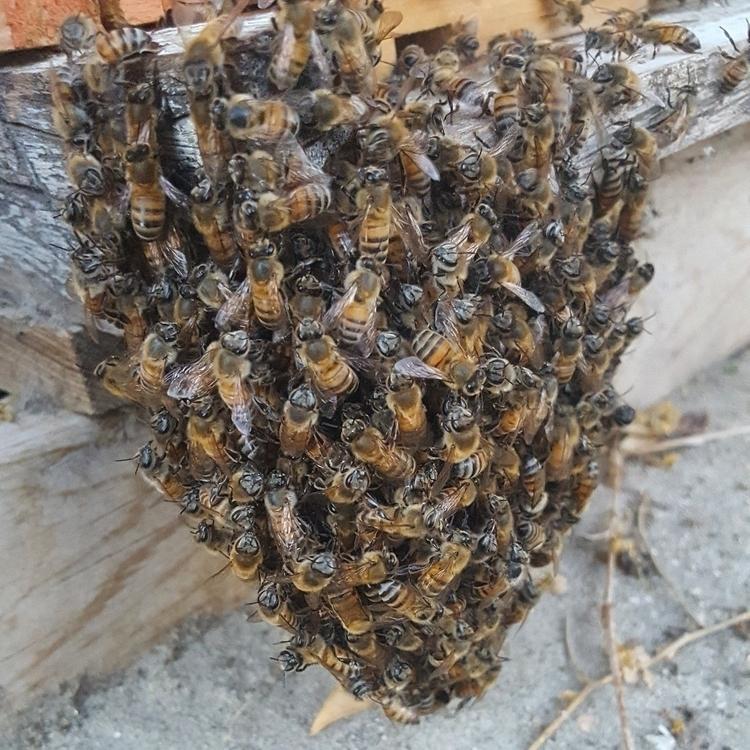 Bees day...Save bees! Save plan - suga4ever | ello