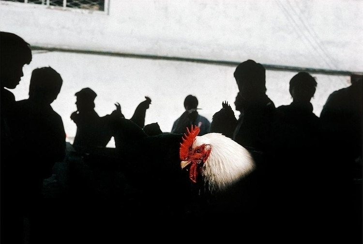Photo Gueorgui Pinkhassov / Mag - streetshootr | ello