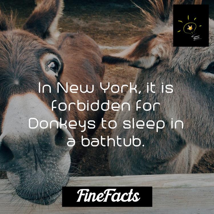 York, forbidden Donkeys sleep b - finefacts | ello