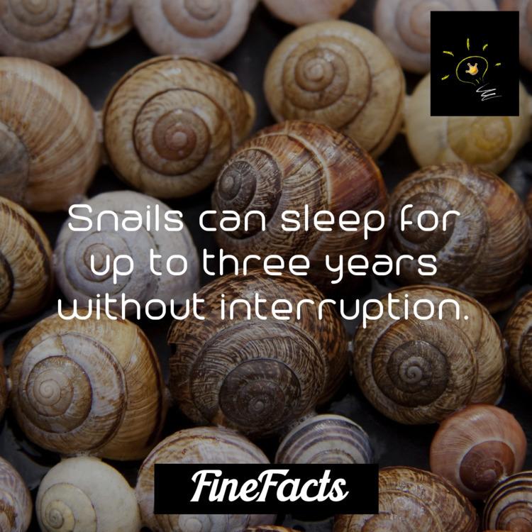 Snails sleep years interruption - finefacts | ello