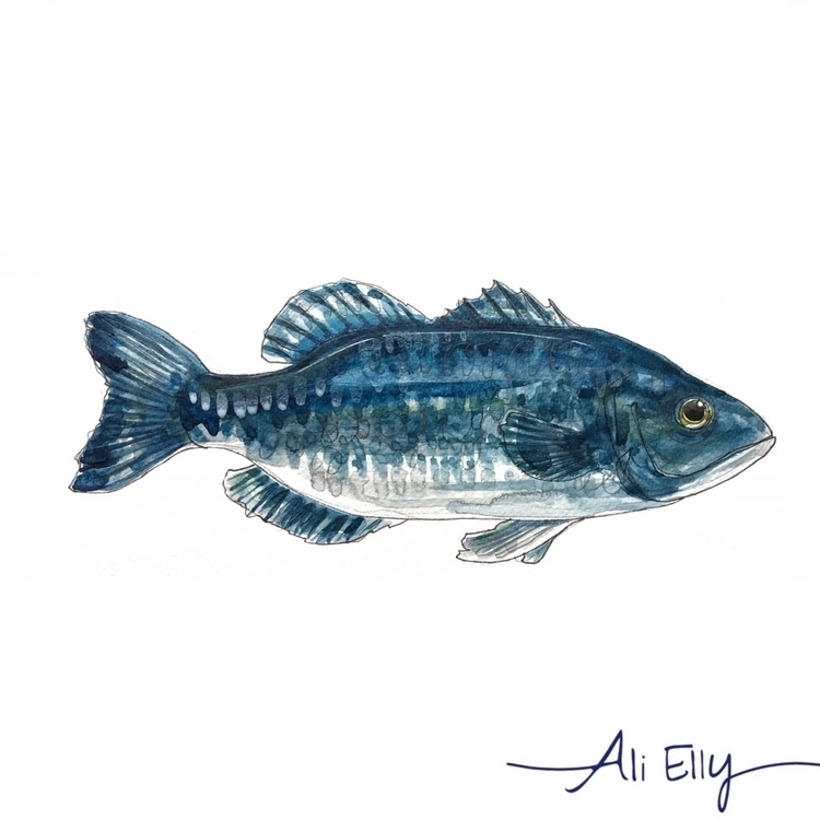 Grumpy fish - nautical, design, illustration - aliellydesign | ello