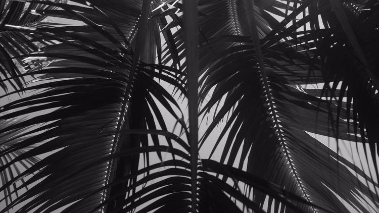 Palm shelter, 2017 Gautier Bert - gautierberthoumieux | ello