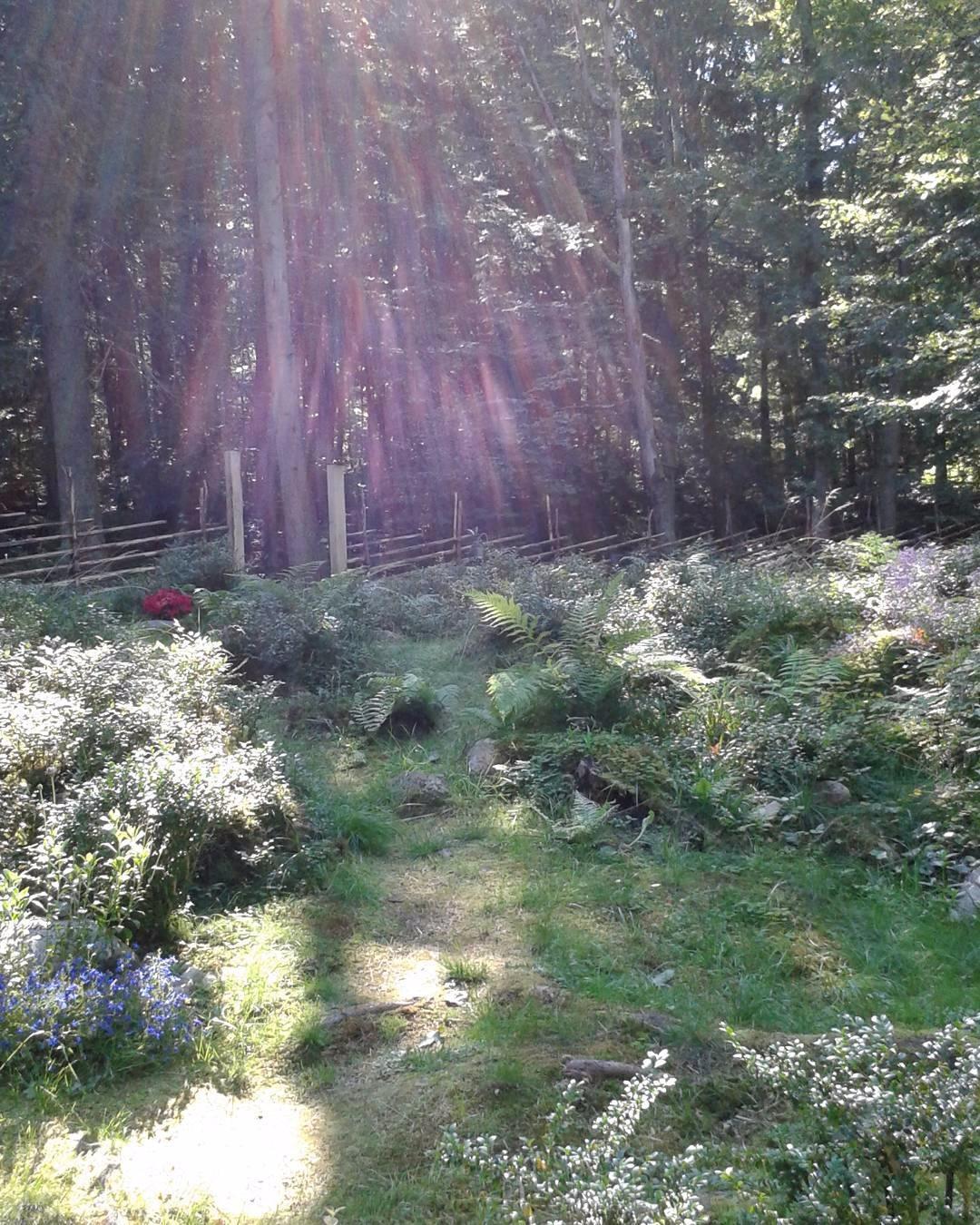 En liten Entré gärdsgården Skog - skogskyrkogardar | ello